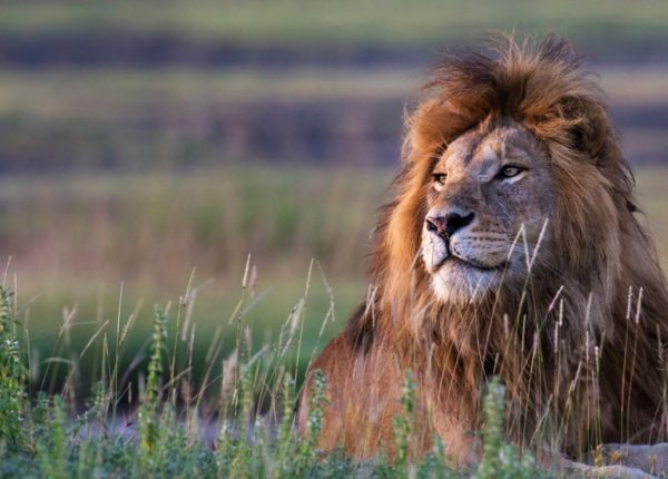 Tanzania Safari .nl:  prive reizen op maat van hoogstaande kwaliteit!