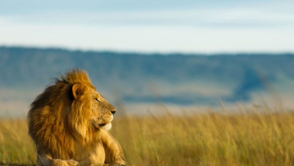 5 daagse Tanzania Safari – National Parks