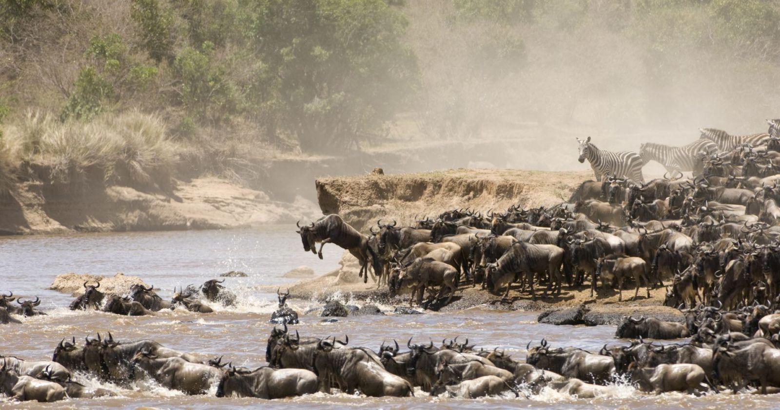 Alles over Tanzania