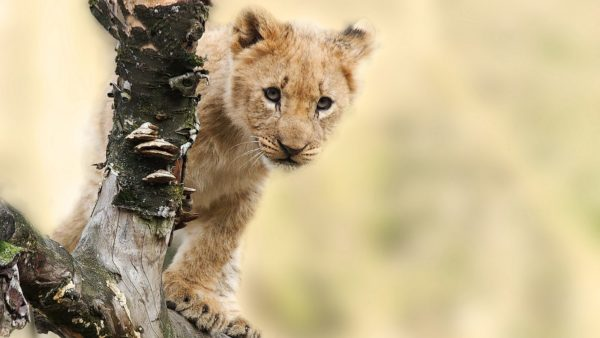7 daagse Safari-vakantie Tanzania