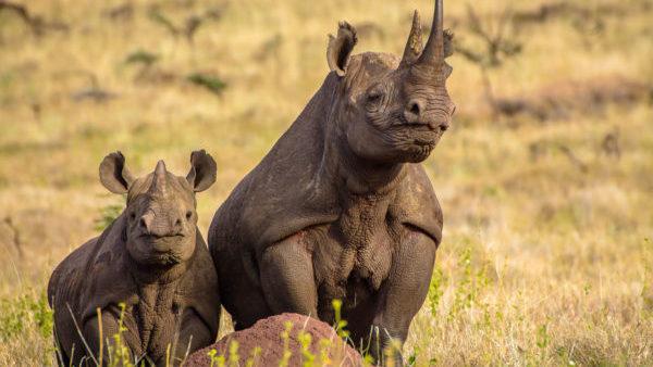 9 daagse Tanzania Safari – Grote Trek