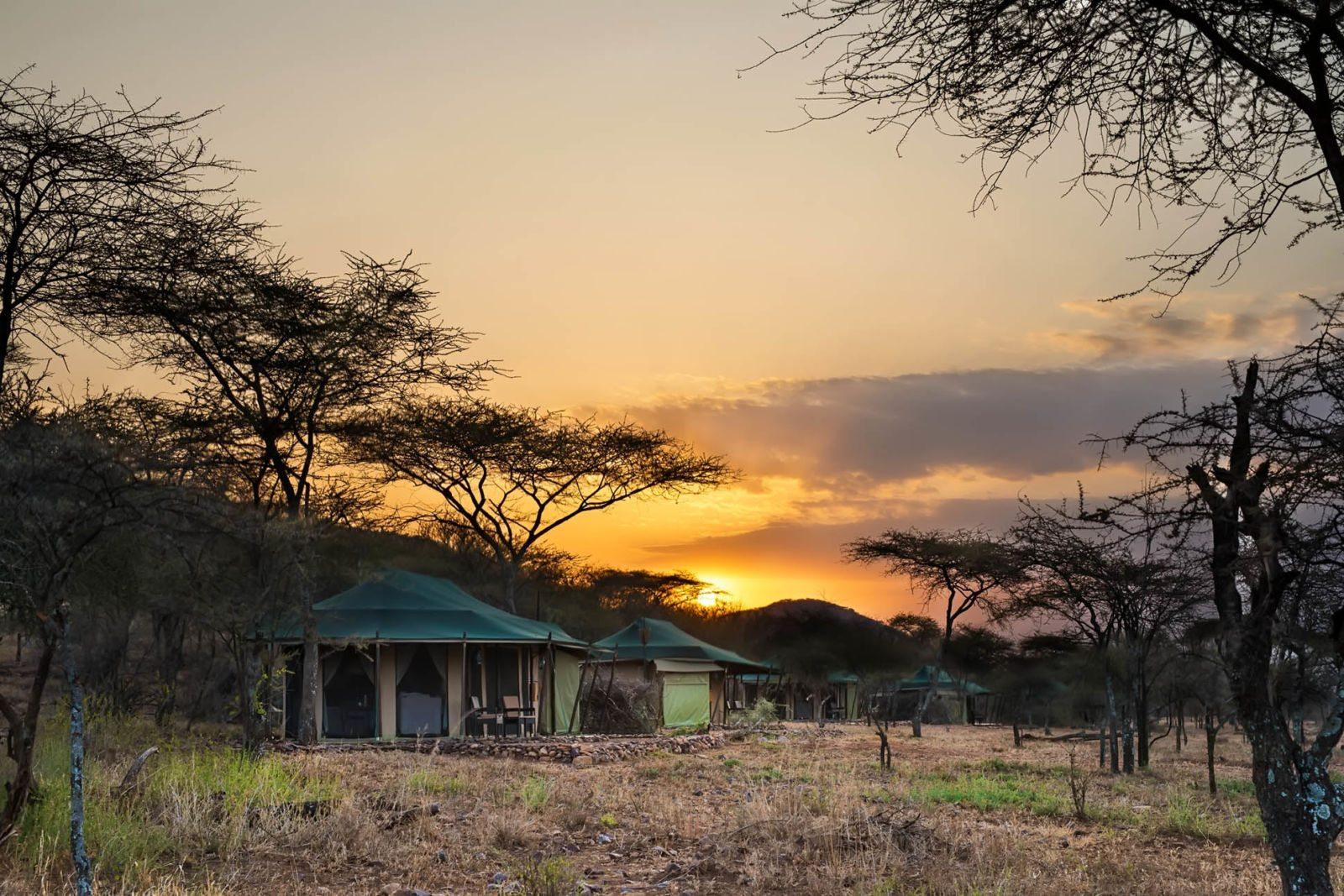 Safari's