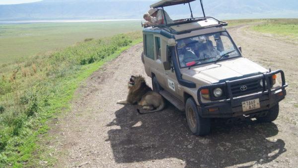 Alleen privé-safari's